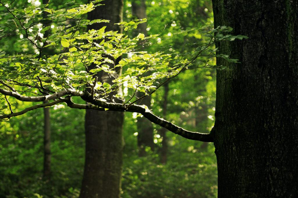 12 Признаков экологической ткани